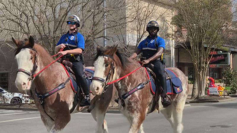 Two Clydesdales, Blayze and Maverick, made their debut this week as new members of the police...