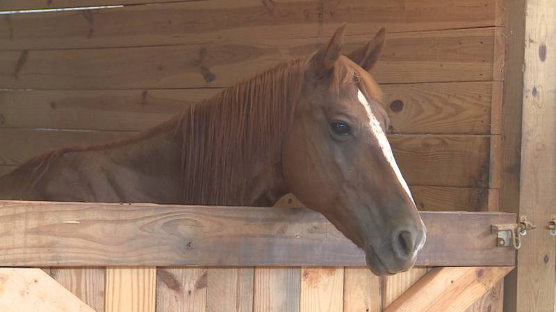 Many people are taking a drug meant for horses and cattle to try to prevent or treat COVID-19.