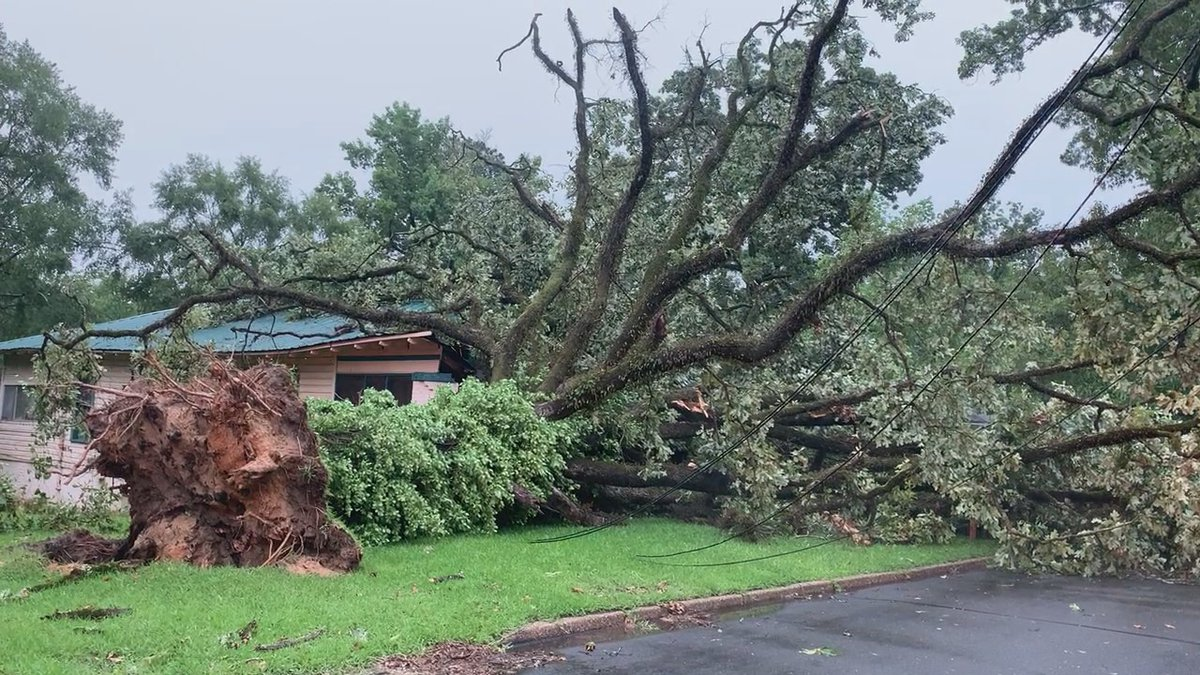 An elderly couple is glad to be alive after a large tree fell on their home on 318 59th avenue...
