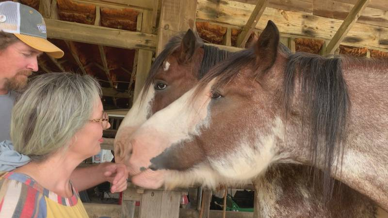 Micheal and Jessica Smith officially became the owners of the Clydesdale horse Friday.