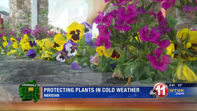 Protecting plants in cold weather