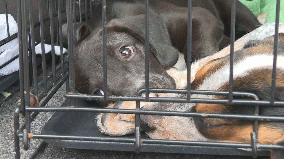 Dogs and cats abandoned on the side of the road dumped and left to die.