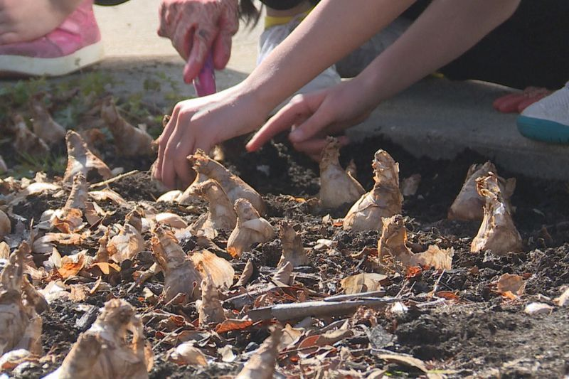 Students from Lamar school gathered in Dumont Plaza to plant daffodils to honor a classmate.