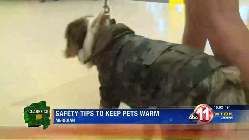 Warm Pets
