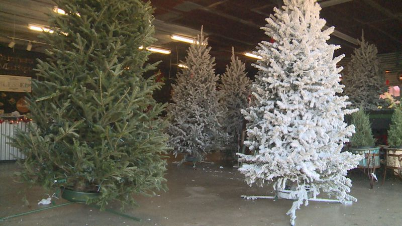 Local fire prevention specialist said one of the best ways to keep your Christmas Tree from...