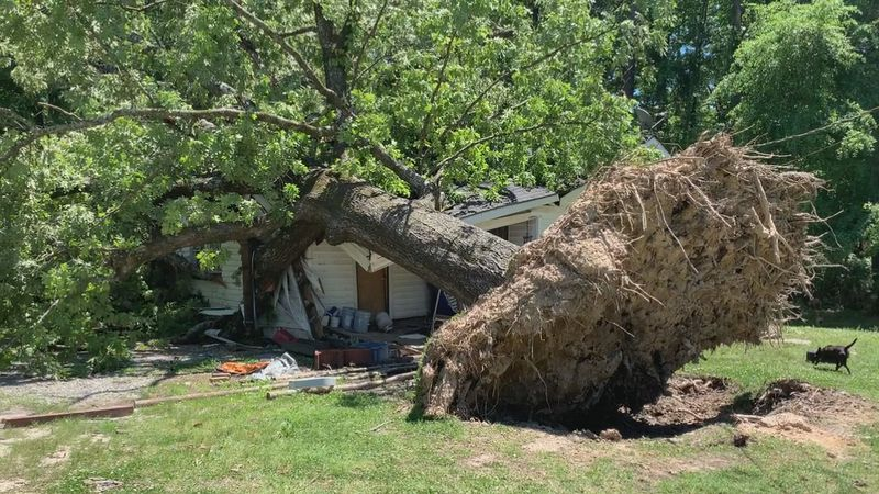 A massive tree crashed onto the home of a man in Nellieburg during Tuesday's severe weather.